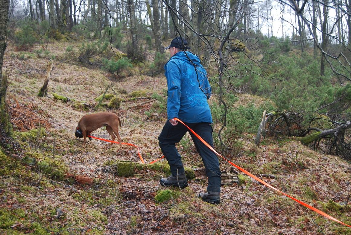 Ein prøver om hunden vil ta noko spor